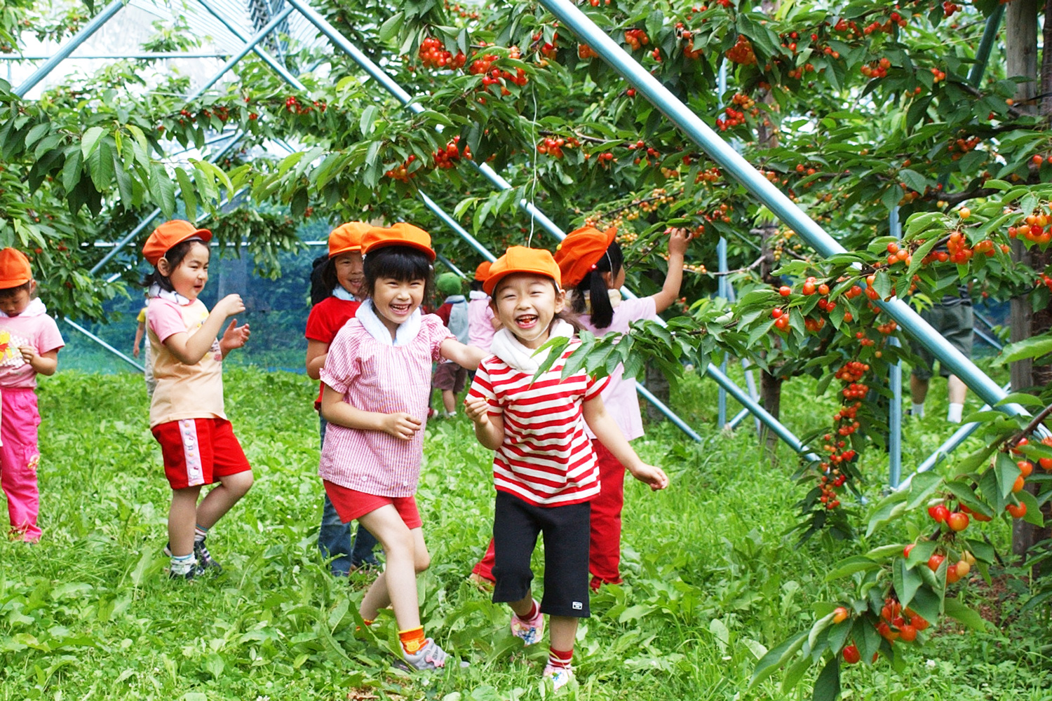 Picking cherries will be a great family activity.