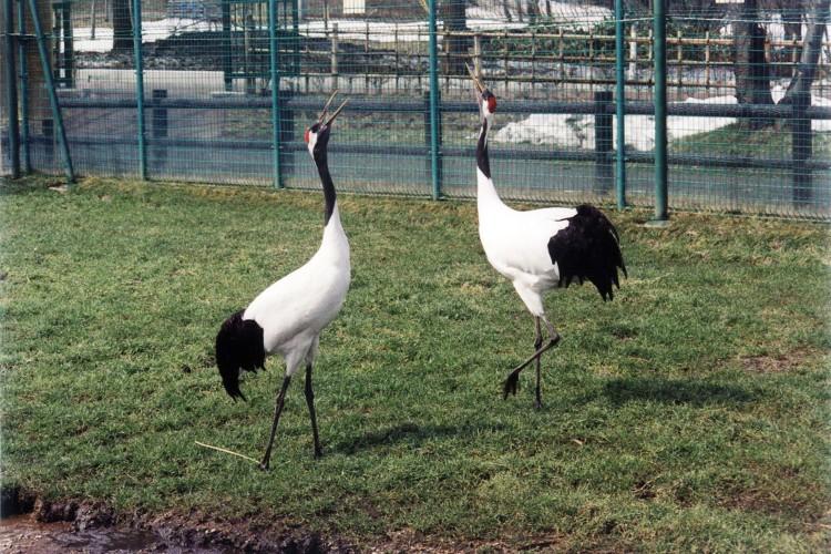 Tsuruta Crane Nature Park