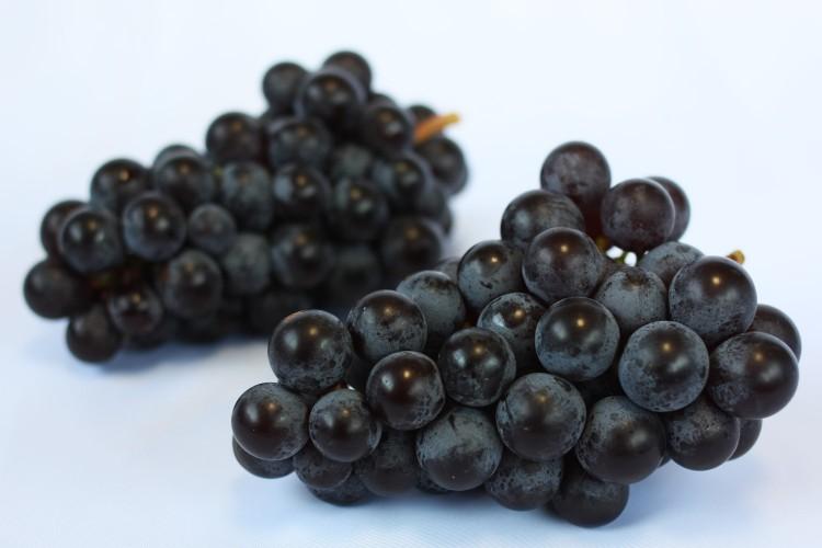 delicious Steuben Grapes