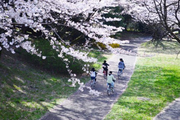 Tsuru no Mai Bridge By Rental Bicycles